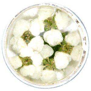 My imenso insignie Verre/Mini fleurs 14mm 14–1181